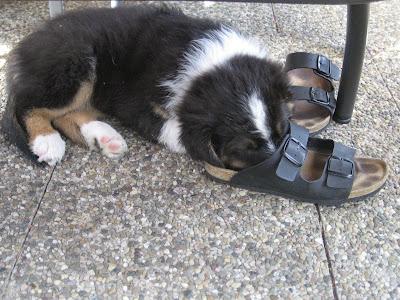 Spikey Schuh