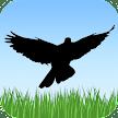 Bird Sounds APK