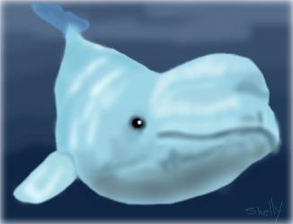beluga baby drawing drawings challenge
