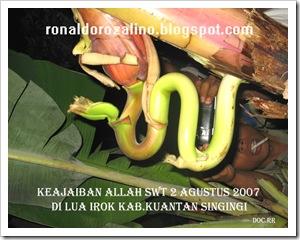 ALLAH SWT2