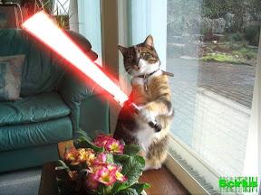 CAT-VADER.jpg