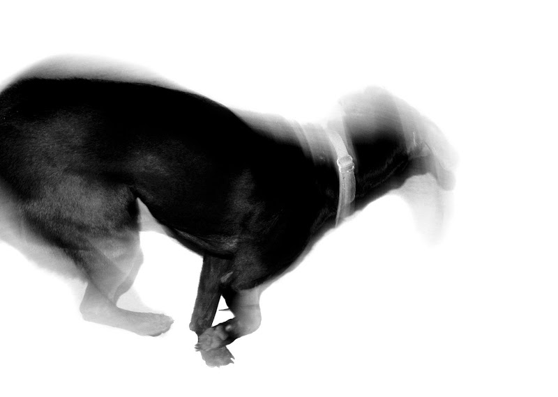 Dog motion blurry black and white background photojournalism