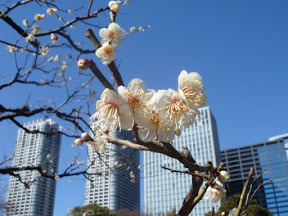 Blossoms in a park near Odaiba