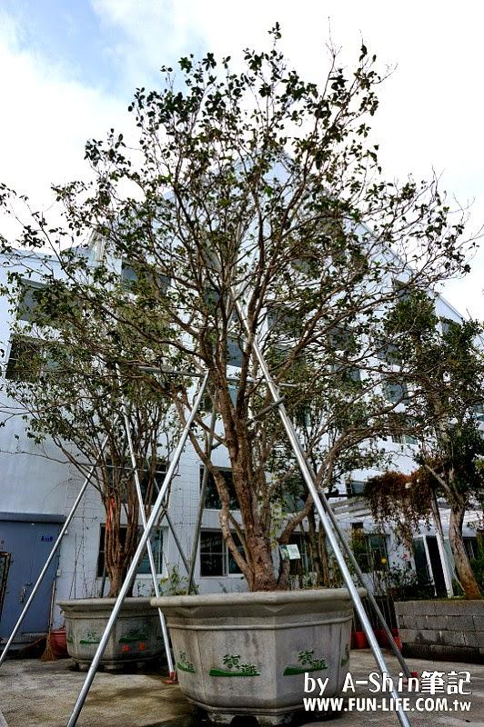 芳香植物博物館