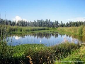 Espejo de agua Humedal Tibanica