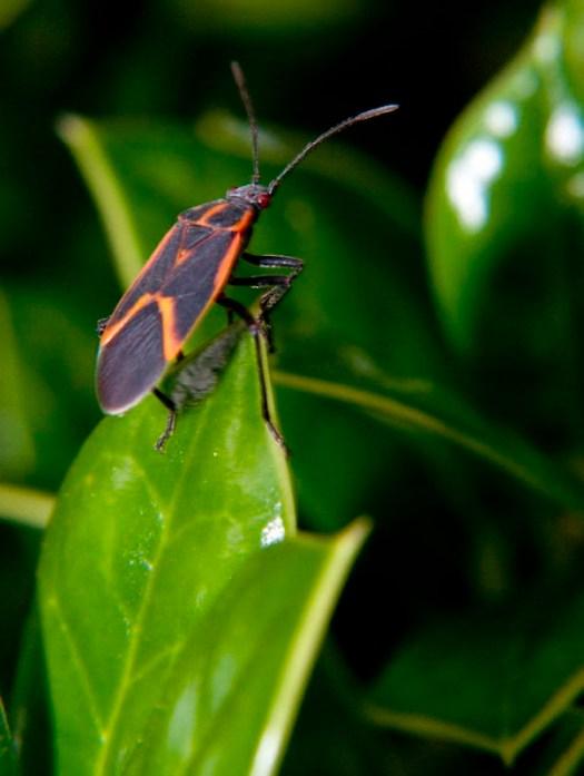 Bug in the backyard Macro Photography