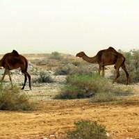 В пустыню!