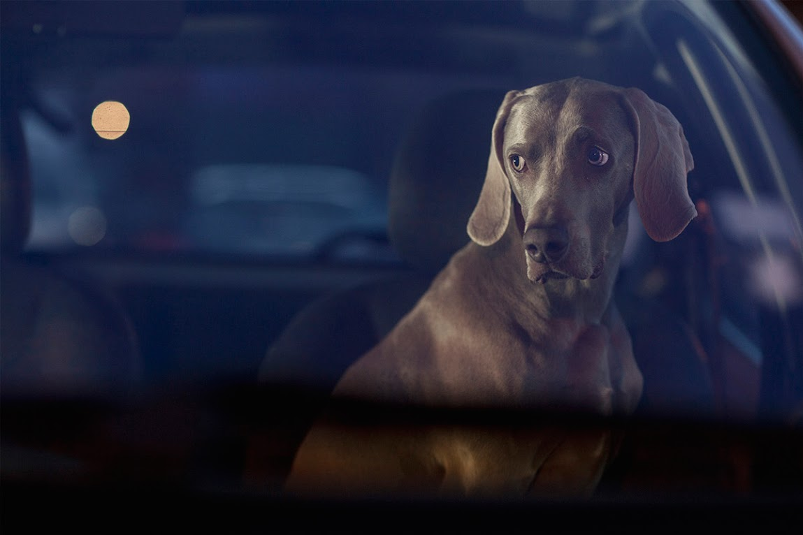 *被鎖在車內沉默的狗:攝影師Martin Usborne 黑暗呈現! 5