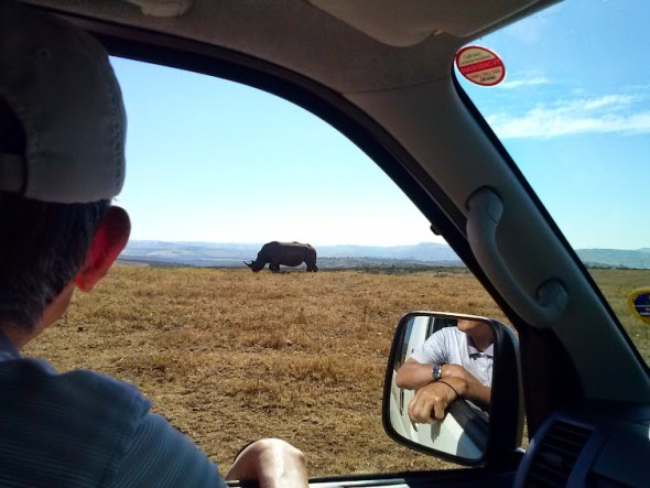 white rhino on our valley of 1000 hills day tour