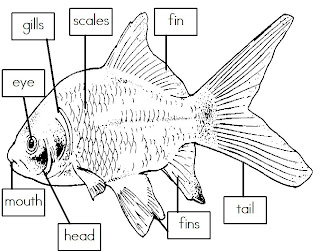 Mrs. I's Class: Label the Parts of a Fish (freebie)