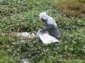 Limpieza en el Humedal Jaboque