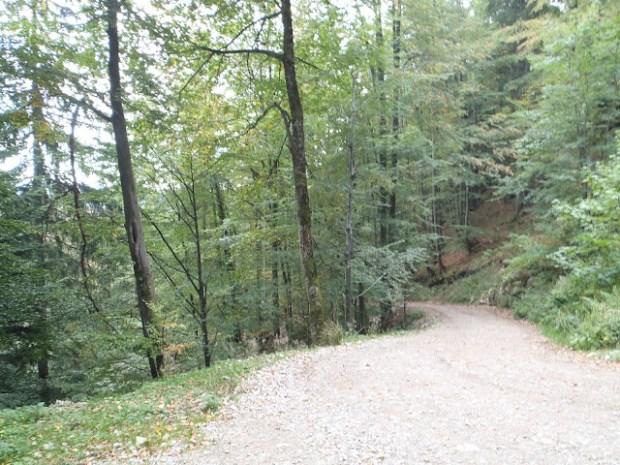 Zwischenzeitlich führt der Weg ein Stück durch einen Wald