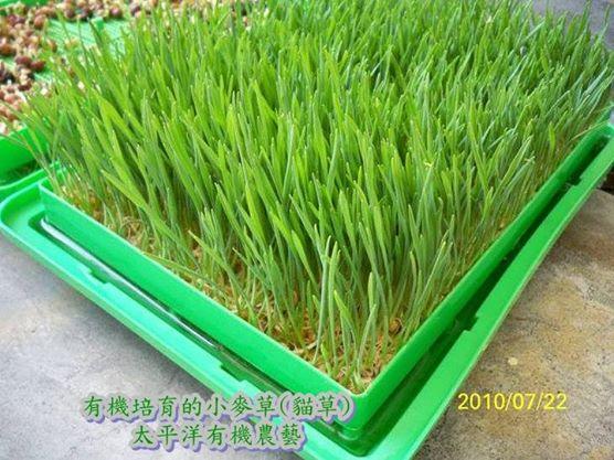 貓草:太平洋有機農藝-芽菜種子/芽菜機/豆芽機/芽菜箱/水耕盤