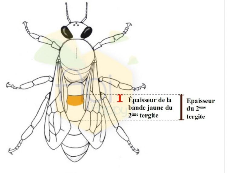 Biom233; tipo