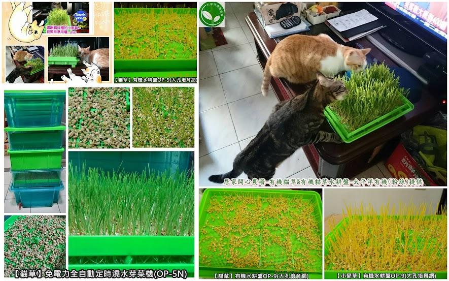 小麥籽 _貓草種植方法 _貓草種植方法 @ 芽菜自己在家簡單種. 有機無毒自己來把關。 :: 痞客邦
