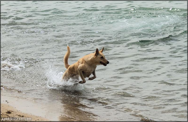 Морские собаки