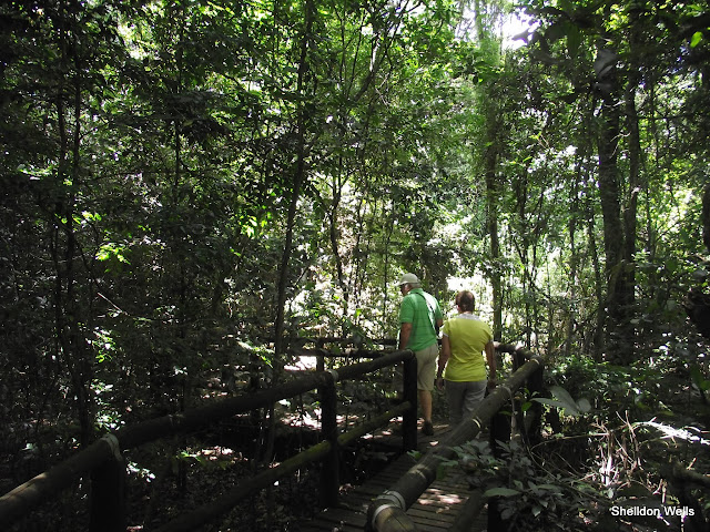 Exploring Dlinza Forest outside of Eshowe