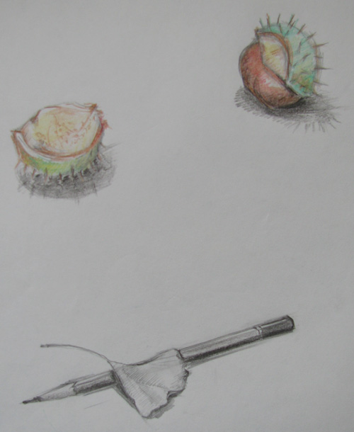 ann-sokolova-chestnuts-and-leaf-with-pencil