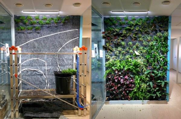 Jardínes Verticales de interior - Plantado y plantado