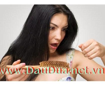 Tinh dầu dừa sẽ giúp bạn trị rụng tóc hiệu quả