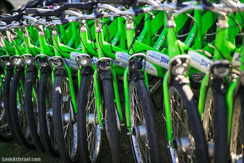 Зеленый год