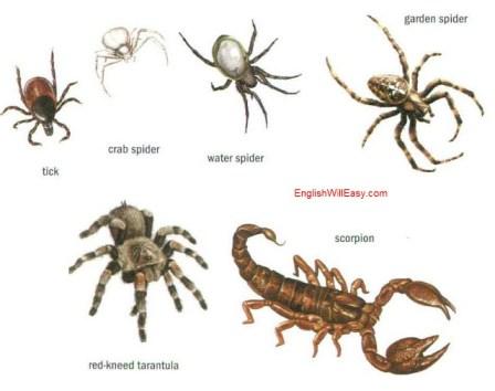 أمثلة من العناكب