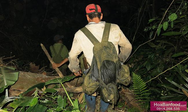 Săn Mật Ong Rừng Tây Bắc - 2014 - 11