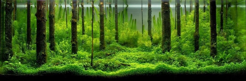 Betta Fish Natural Habitat | Betta Fish Life