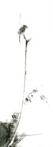 El rincón del Aikido: Miyamoto Musashi