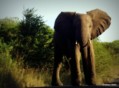 Elephant Crossing