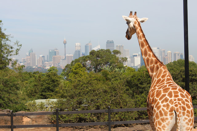 how to get to taronga zoo from sydney city