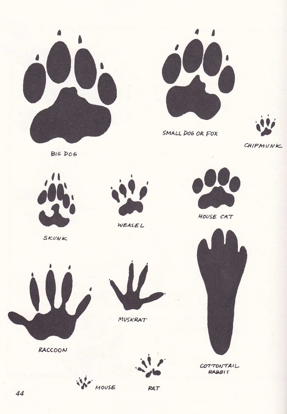 Wild Animal Paw Print