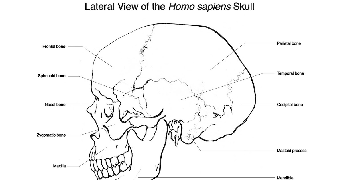 Strange Nostalgia for the Future: Lateral View of the Homo
