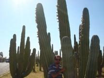Sancarlosfortin Mexico Seris Hermosillo