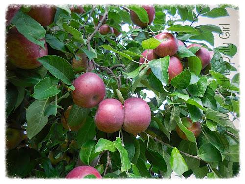 apples at http://www.momistheonlygirl.com