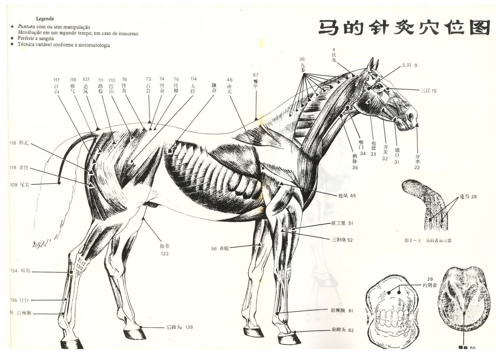 AnimaisOk: A Encantadora de Cavalos