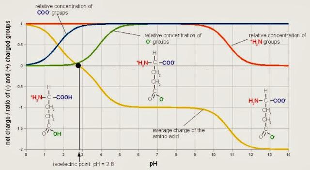 等電點(Isoelectric point(pI)) - 小小整理網站 Smallcollation