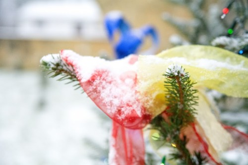 DSC 1988 White Christmas!