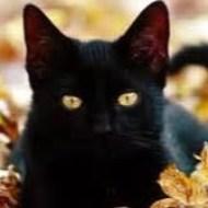 Kitten fromHell