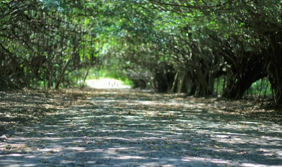 台南新營景點,長勝營區綠色隧道-3