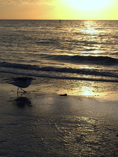 Photo: seagull on Florida beach at sunset