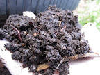 How to Make and Use Worm Tea (5/6)