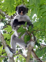 Monkey in Jozani
