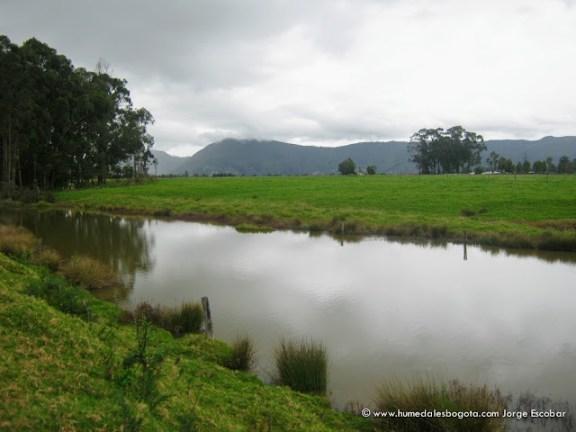 Humedal Guaymaral
