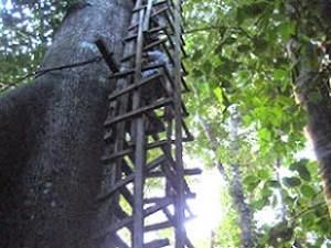 Okomu treehouse