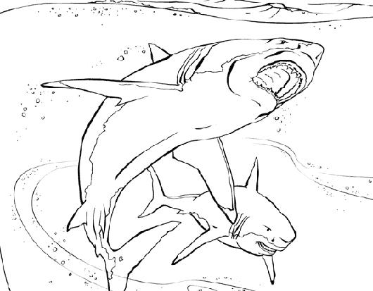 Coloriages Enfants: coloriage requin : imprimer dessin requin