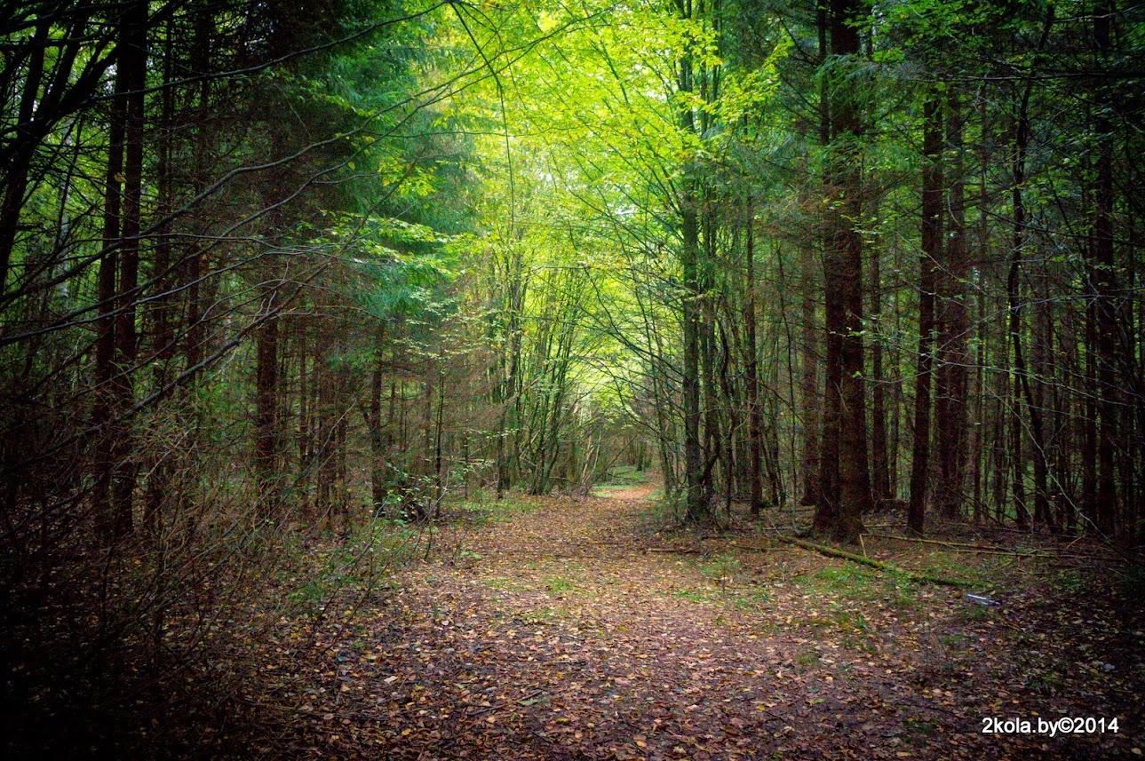 Лес новогрудской возвышенности