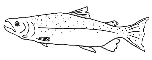 Time to Fly: FREE Salmon Coloring Pages