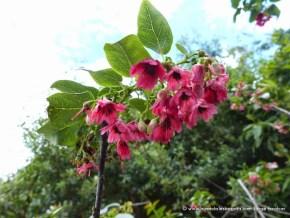 Flor Raque