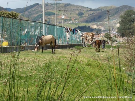 Humedal Tibanica, invadido por caballos, carreteros y basuras